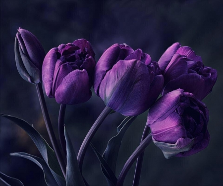 Beautiful - flower, purple, bouquet, tulip