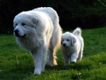mother and puppy out for a stroll