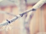 Softness winter