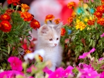 Kitten in Spring Flowers