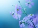 Lavender Floral Light