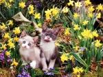 Kittens among Daffodils