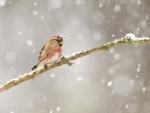 Bird in the snowfall