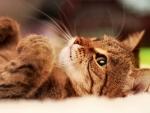 Cool Cat f
