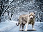 Digital Tiger