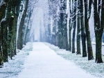 Beautiful snowy alley