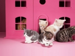 pink kittens house