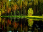 Calm forest lake
