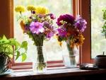 Springtime to my window.