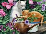 Garden Cats F1