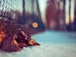 Dry winter leaf