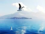 * Seagulls in Switzerland *
