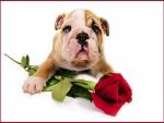 Valentine for Roger