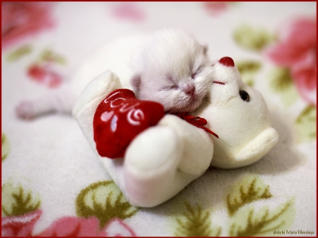 Happy Valentine S Day Carmen Puppies And Kittens Wallpapers And