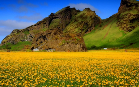 Field of yellow flowers - hd, sping, yellow, sky, green, mountains, wallpapers, flowers, nature, field, blue
