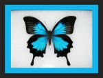 THE WONDERFUL MORPHO