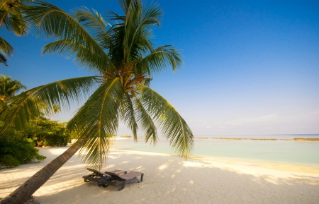 Sit Back And Relax - morning view, palm, beautiful, sea, beach, tree, sand, paradise, summer, vacations, blue sky, tropical