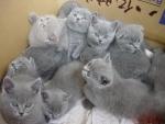 a bunch of cute kittens
