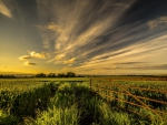 Sunset - farm