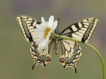 lovely butterfly on daisy