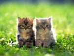 cute pair in the garden