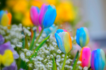 Colorful Spring Flowers Nature Background Wallpapers On