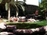Flamingos at the Flamingo 1