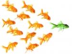 Green goldfish