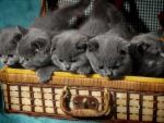 * Kittens *