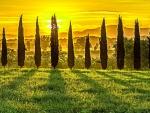 Tuscan sun (Italy)