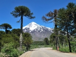 Araucaria Road