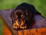 ♡Adorable puppy♡