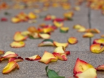 *Roses petals on the street*