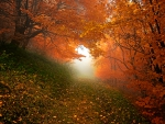 *Autumn scenery of forest*