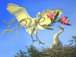 Love of White Egrets