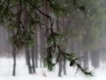 Raining and snowing