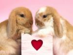 ..Valentine's Rabbits..
