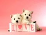 Valentines - Puppy Love