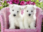 White Puppies Sitting