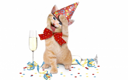 Happy Birthday Cats Amp Animals Background Wallpapers On