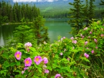 Wild Roses At Pyramid Lake