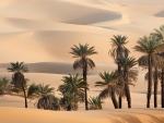 Palm trees defying the desert