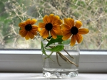 * Sunny window *