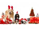 * Happy Holidays *