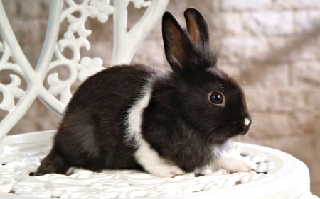Cutie - cute, rabbit, black, bunny, easter, white, animal, sweet