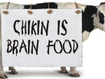 Chikin is brain food