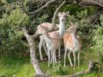 Beautiful Deer Trio