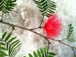 Rui Flower