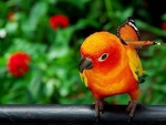 Parrot and butterfly