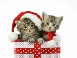 Kitten in Presents